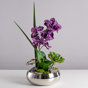 Exotic Orchide